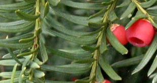 Faites un inventaire reprenant les noms des plantes présentes