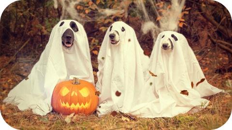Fêtez Halloween en toute sécurité!