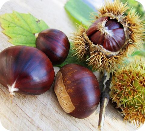 L'automne est la saison des châtaignes, des marrons, des noix et des glands.