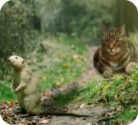 Les produits les plus utilisés en Belgique pour tuer les rats et les souris appartiennent à deux grands groupes.