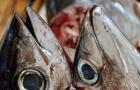 Les personnes intoxiquées à l'histamine ne sont pas allergiques au poisson.