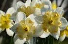 Il faut encore attendre un peu le printemps mais la nature commence déjà à fleurir.