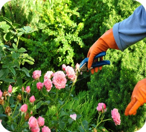 Jardiner sans souci