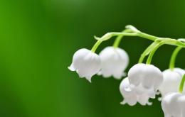 Toutes les parties de la plante contiennent des substances irritantes.