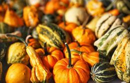 Les cornichons, les courgettes, les melons, les potirons, les courges ornementales appartiennent à la grande famille des cucurbitacées.