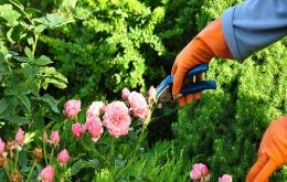 Les plantes épineuses peuvent entrainer de douloureuses blessures.