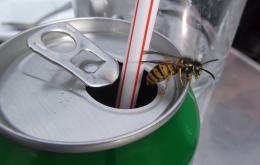 Attention aux boissons en cannettes! Versez de préférence dans un verre.