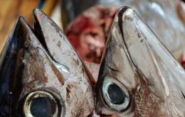 La chair de certains poissons tels que le thon, la bonite, les anchois, les maquereaux est riche en histidine, un acide aminé.