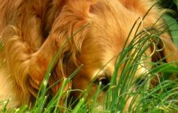 Les chiens ne sont pas difficiles quand il s'agit de nourriture. Ne prenez pas de risque et laissez le chocolat hors de portée du chien.