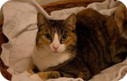 Un antidouleur aussi banal que le paracétamol est très toxique pour le chat.