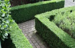 N'hésitez pas à vous faire aider d'un spécialiste lorsque vous choississez vos plantes.